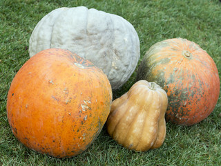 colored pumpkins on the grass