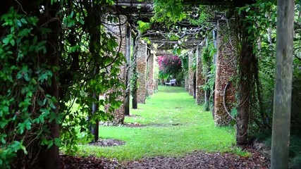 romantic nature passage. hd zoom