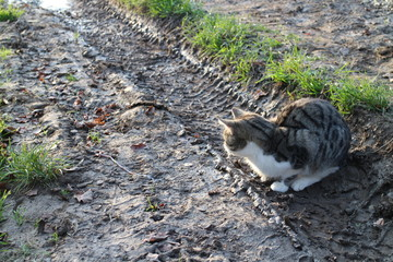 Cat on muddy pathway with earthworm