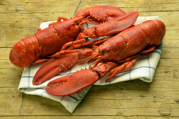 Homarus americanus American lobster Expo Milano 2015