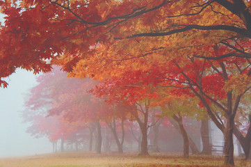 Autumn forest and maple leaves