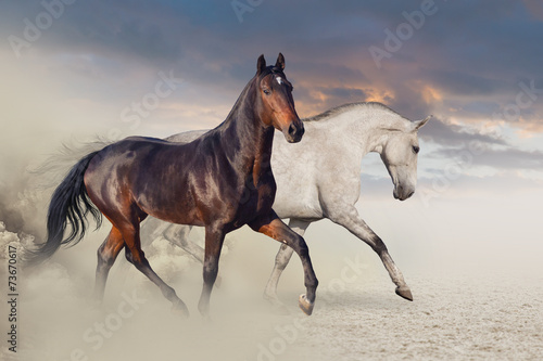 Fototapeta Group of two horse run on desert against beautiful sky