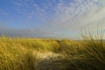 Dünen an der Nordsee