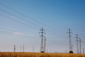 Electricity poles on a meadow