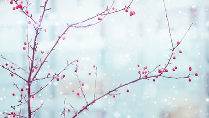 branches of red berry and snowfall