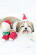 Cute shih tzu puppy in christmas theme