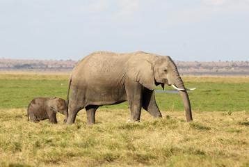 Elefantenmutter mi Kind