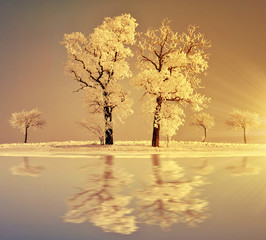 Beautiful winter landscape with trees at sunset