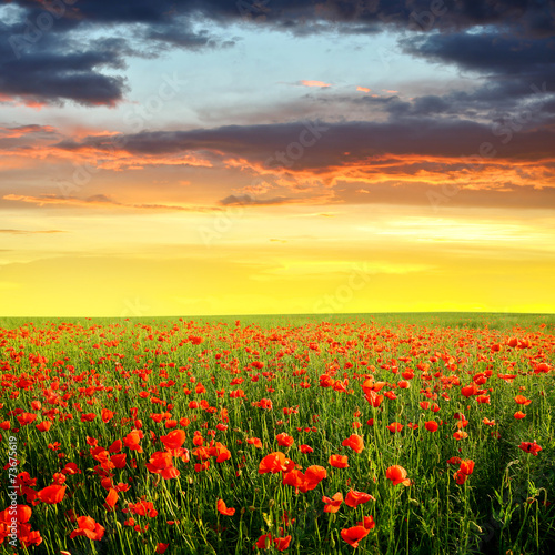 Plakat Spring landscape with red poppy field in the sunset