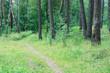Spring forest. Finland.
