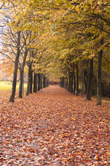 Beautiful Autumn path at the park