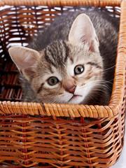 Striped kitten in a basket.