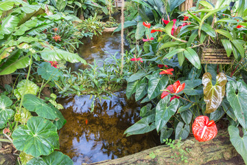Botanical garden with small creek and flamingo flowers