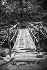 The bamboo  bridge in rain forrest