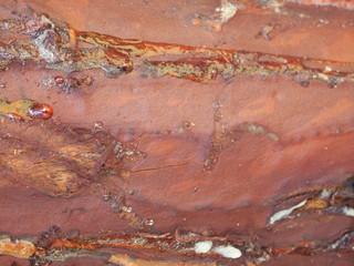 Closeup of pine bark