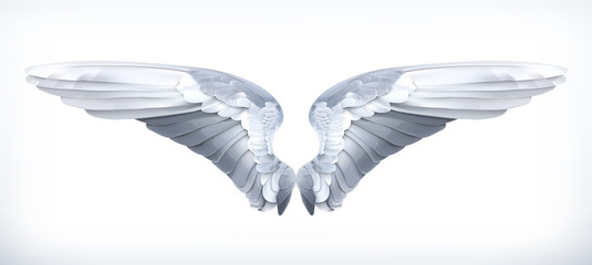 Wings, vector illustration