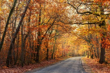 Vivid fall colors in forest