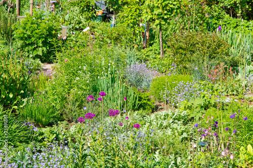 Bauerngarten mit Kräutern im Frühling - 73691861