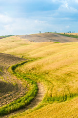 Fields and peace in the warm sun of Tuscany, Italy