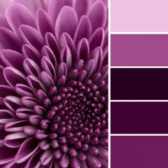 Purple flower and color swatches
