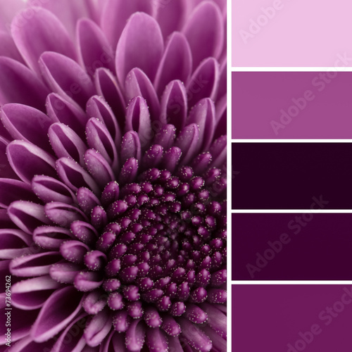 Foto op Plexiglas Madeliefjes Purple flower and color swatches