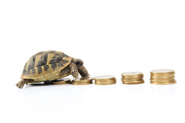 Money on turtle