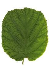 blatt_leaf_21