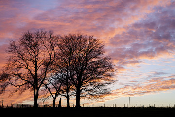 two winter trees with sunset