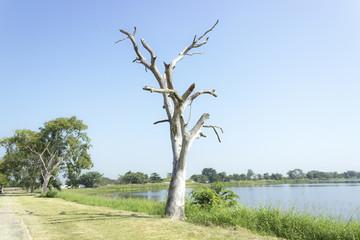 The dry tree
