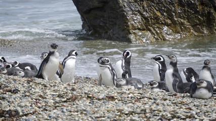 pinguini pinguinera punta arenas 23