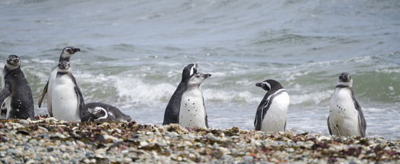 pinguini pinguinera punta arenas 15