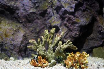Corals reef.
