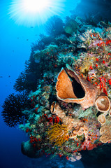 Sponge, feather stars, black sun coral in Banda underwater