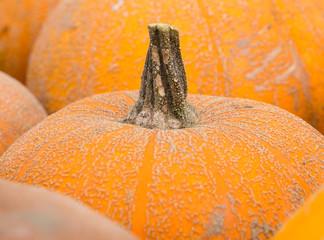 Pumpkin on the farmers market