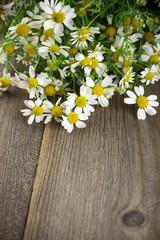 Chamomiles bouquet