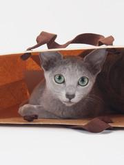 茶色の手さげ袋に入ったロシアンブルーの子猫