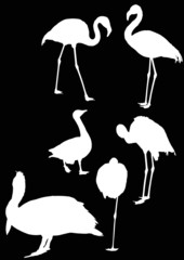 flamingo and other birds on black