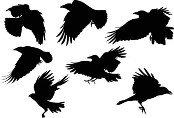 set of seven crow silhouettes isolated on white