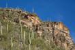 Saguaro Landscape - 73708008