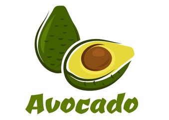 Green avocado fruit sketch