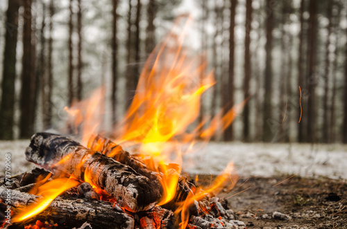 Fire in the winter forest - 73709068