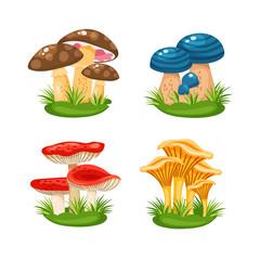 mushrooms in grass