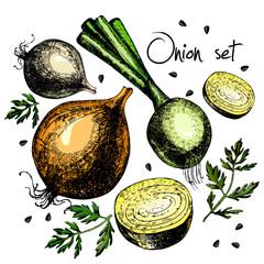 Set of onion. Illustrations. Vector.