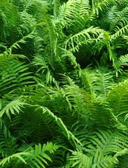 bush of fern close up