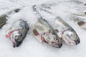 Troats on ice
