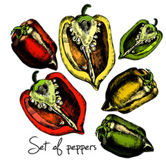 Set of  peppers. Illustrations.