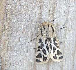 Moth on wood