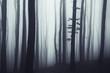 simple forest landscape
