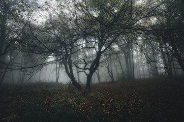 dreamy forest with fog