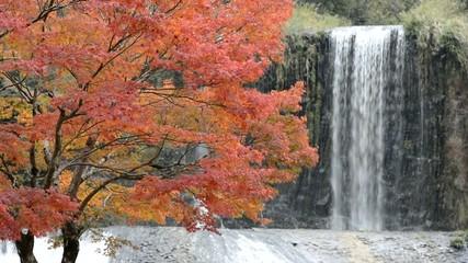 龍門の滝をバックにイロハカエデの紅葉